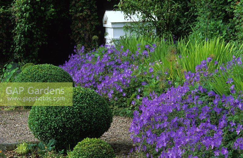 Summer border with Geranium 'Johnson's Blue' and Buxus - Box sphere topiary at Veddw House in Gwent