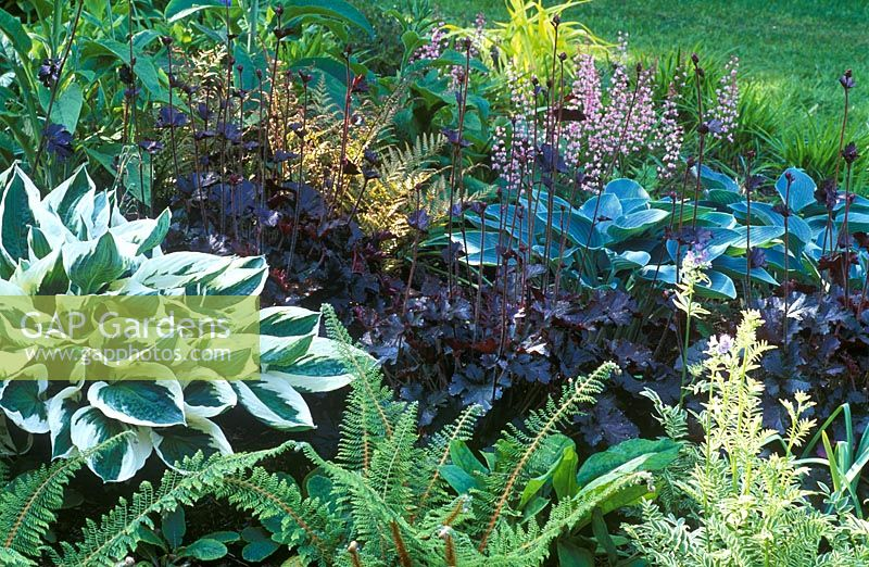 Foliage border with Huechera 'Prince', Polemonium caerula 'Brise D'Anjou', Polystichum setiferum 'Madame Patti', Hosta 'Patriot'
