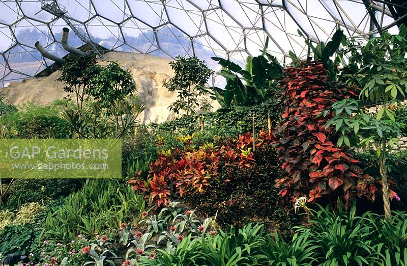 The Eden Project Cornwall Tropical Bio Dome Interior