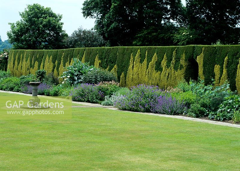 GAP Gardens - Unusual Hedge - clipped tapestry hedge created by ...
