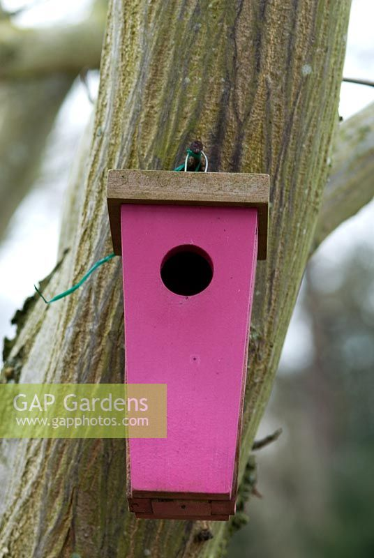 Pink wooden Bird nesting box nailed to a tree at Chippenham Park in Cambridgeshire