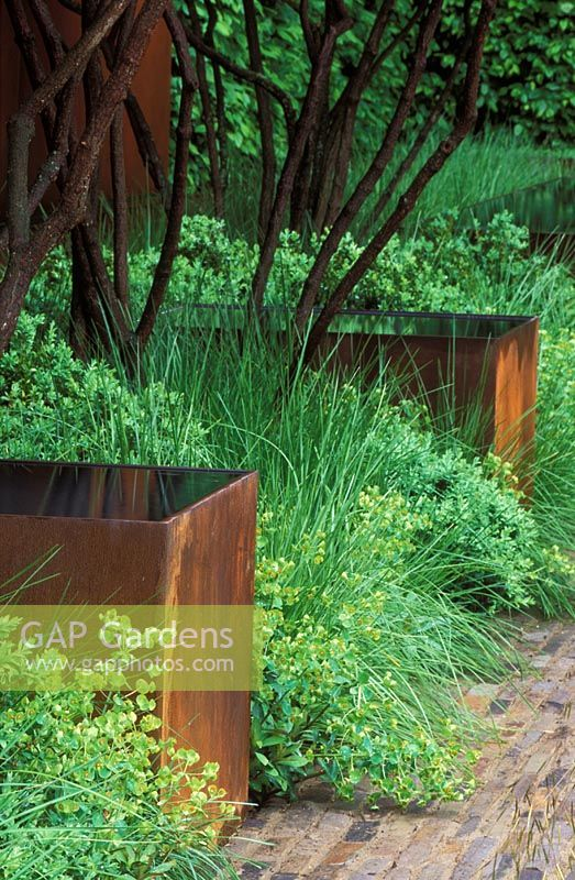 Rusted corten steel water containers amidst green planting of grasses, Euphorbia and Buxus.