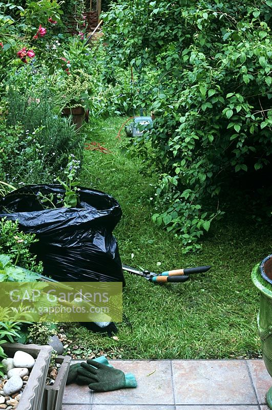Tidying up on overgrown garden, black rubbish bin to collect prunings and cuttings from overgrown garden