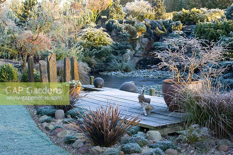 The frozen pond and deck on a frosty winter's morning. Container of Prunus incisa 'Kojo-no-mai', wooden duck ornaments and slate posts. Conifers on rock garden beyond.