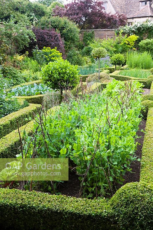 Parterre Vegetable Garden With Clipped