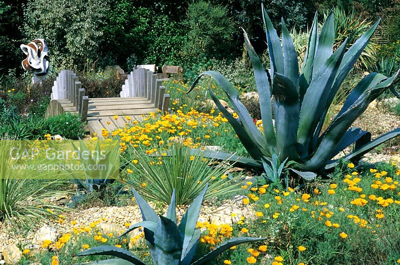East Ruston Old Vicarage Garden, Norfolk with bridge, Agave and Eschscholtzia californica