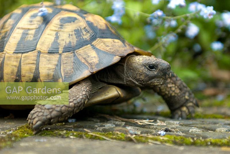 Tortoise on the run
