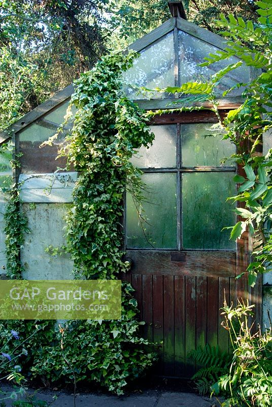 A shady greenhouse with an ivy clad door