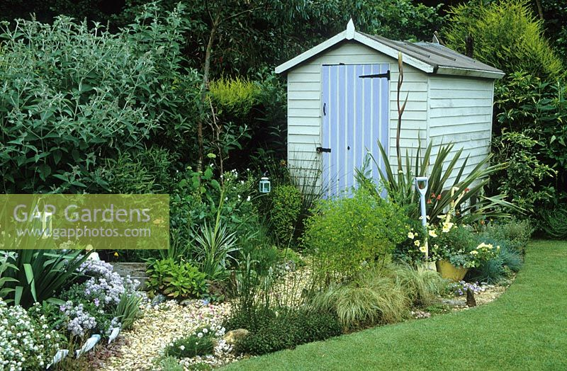 Gravel Path Leading To Painted Shed In Seaside Themed Garden With Eryngiums Yuccas And Phormium