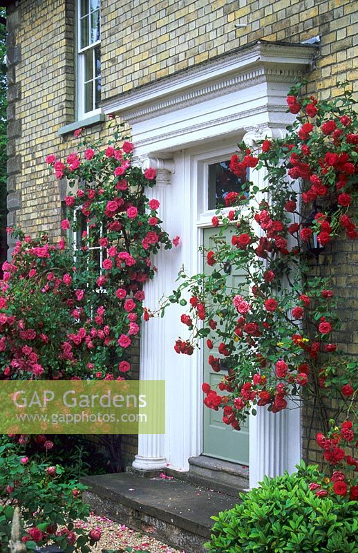 Gap Gardens Climbing Roses Around Front Door Of House