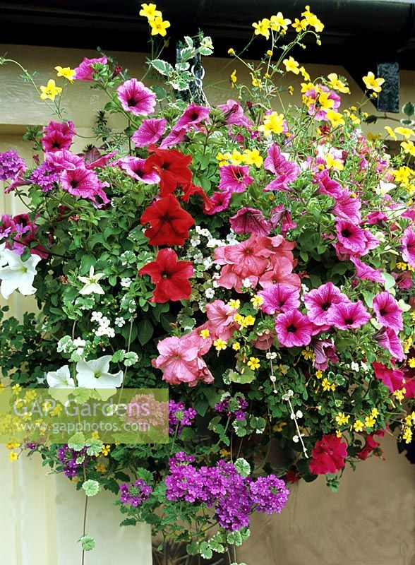 Flower Varieties For Hanging Baskets : Gap gardens eight varieties of foliage and flower in a
