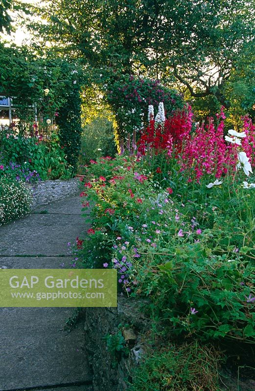 Path Through English Cottage Garden Plants In Borders Including Geranium Erigeron Profusion