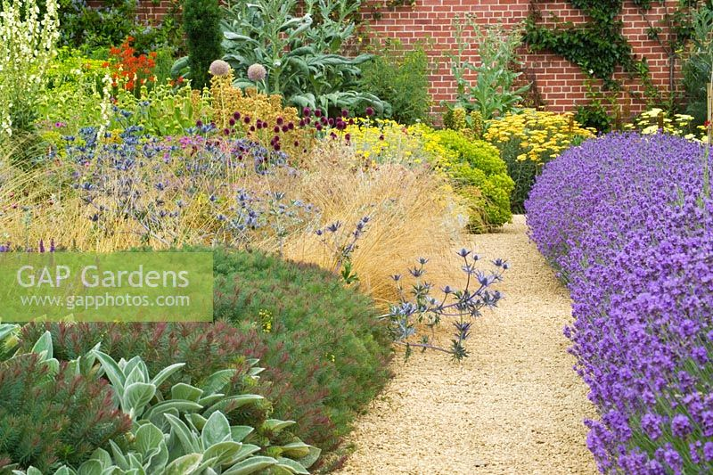 Borders at Broughton Grange including Lavandula angustifolia 'Munstead', Stachys byzantina and Eryngium x zabelii. Gravel path
