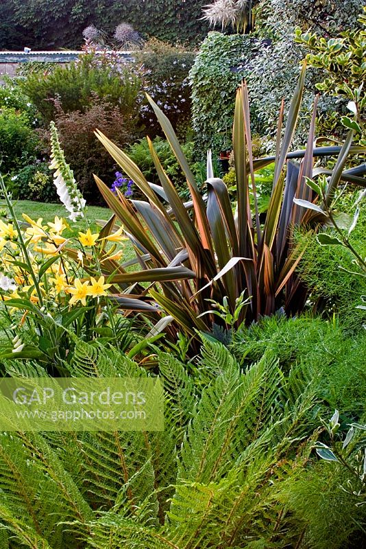gap gardens phormium 39 rainbow queen 39 with matteuccia. Black Bedroom Furniture Sets. Home Design Ideas