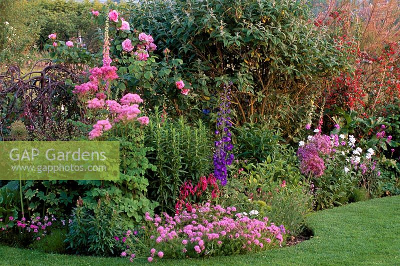Gap Gardens Launa Slatter 39 S Garden Border With Thalictrum Aquilegifolium Rose 39 Gertrude