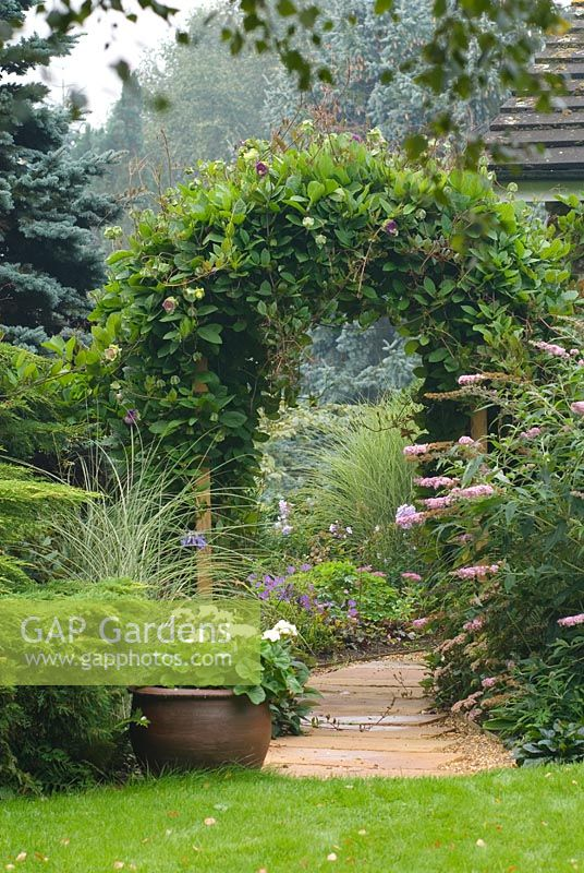 View along paved pathway through Wooden arch covered with Cobaea scandens with Buddleja and Miscanthus sinensis 'Morning Light' planted nearby and white flowered Pelargonium in a container
