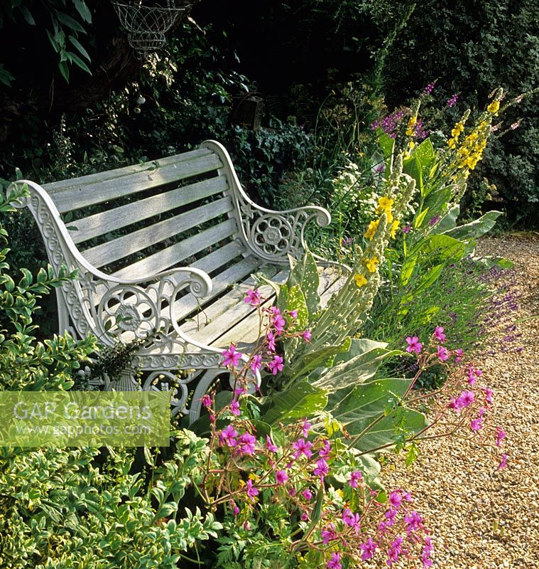 Bench Beside Gravel Path In Country Cottage Garden