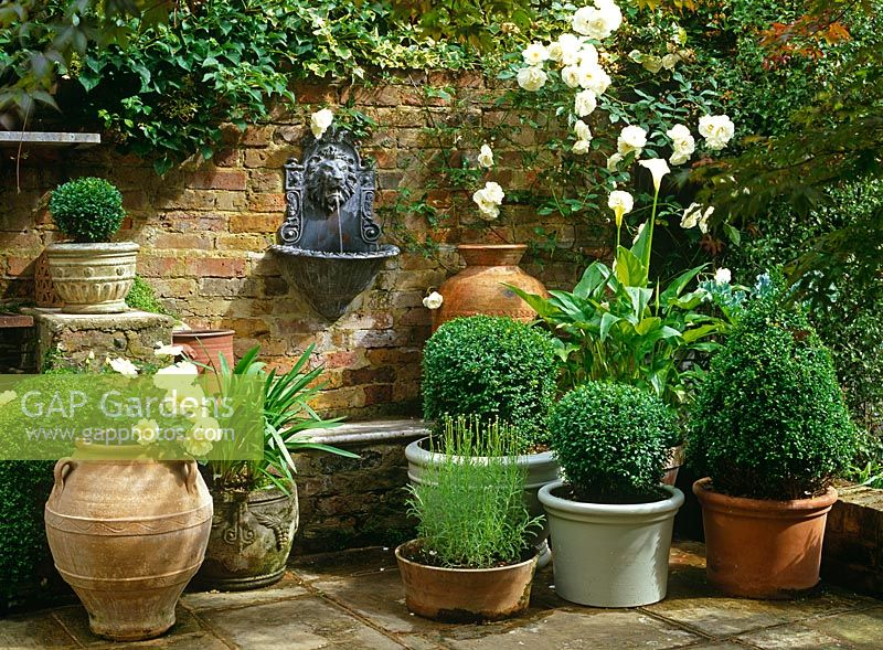 Gap gardens small formal garden with group of pots of for Small garden ideas with pots