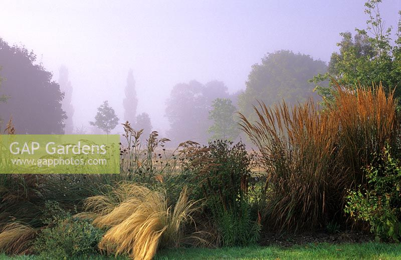 Gap gardens autumnal border of ornamental grasses with for Ornamental grass border design