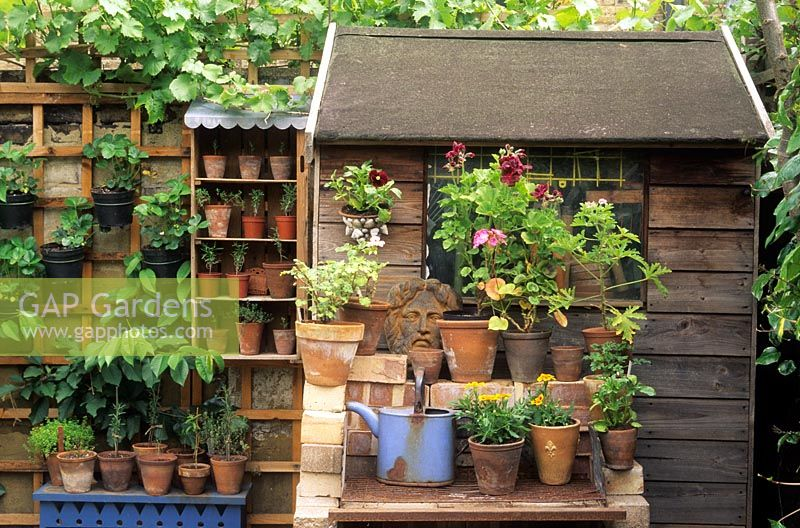 Garden Sheds Jersey Channel Islands gap gardens - plants in small pots around garden shed in london