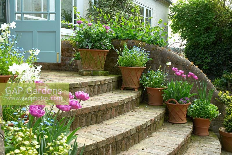 Brick steps leading from garden to conservatory with pots of tulips 'Lilac Perfection, Myosotis - Forgetmenots and Narcissus