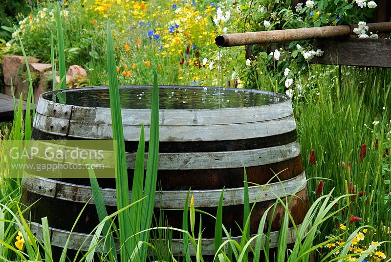Rain water barrel and wild flowers - The Fetzer Sustainable Winery Garden, Chelsea 2007