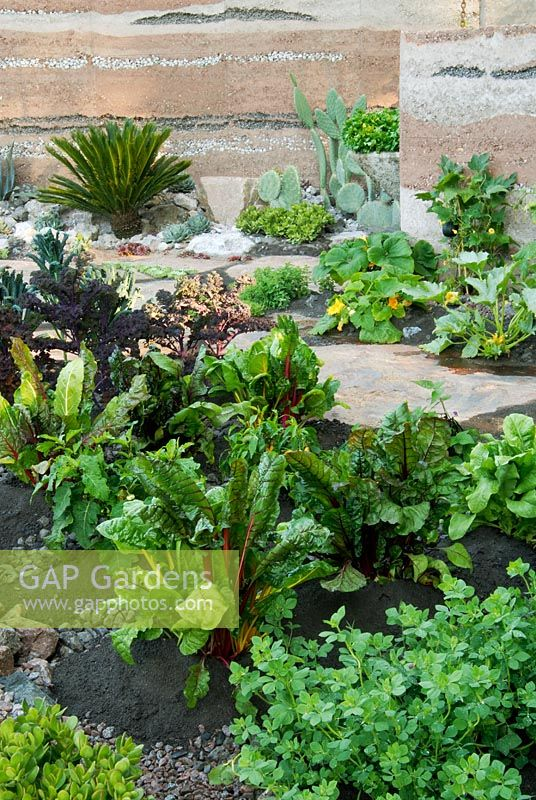 Edible and healing plants in '600 Days with Bradstone' Garden, Chelsea 2007. Winner of Gold Medal and Best in Show.