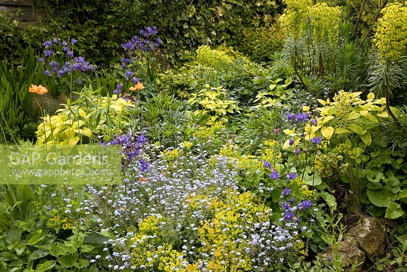 Informal Spring border with Myosotis and Euphorbia at Brook Cottage Garden - Cotswolds