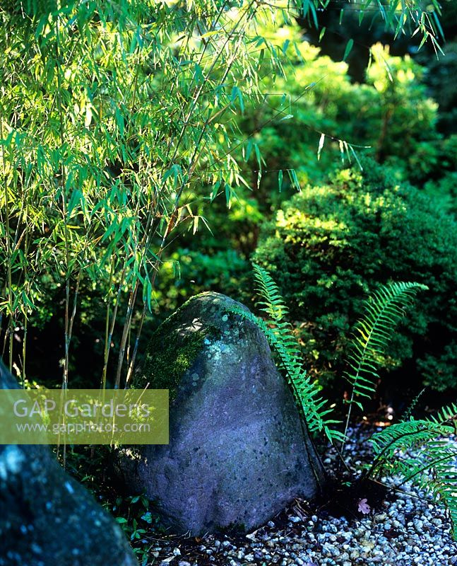 Detail in Japanese garden of bamboo, stone and fern