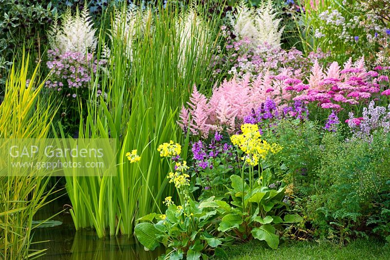 Primula candelabra and Astilbe beside pond in the 'View Across The Water' garden, Hampton Court 2007