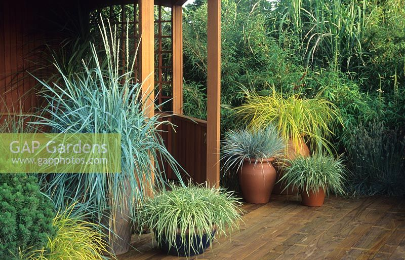 Gap gardens ornamental grasses in containers image no for Best ornamental grasses for pots