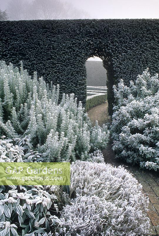 Gap Gardens Winter Border With Rosemary Rosmarinus Senecio