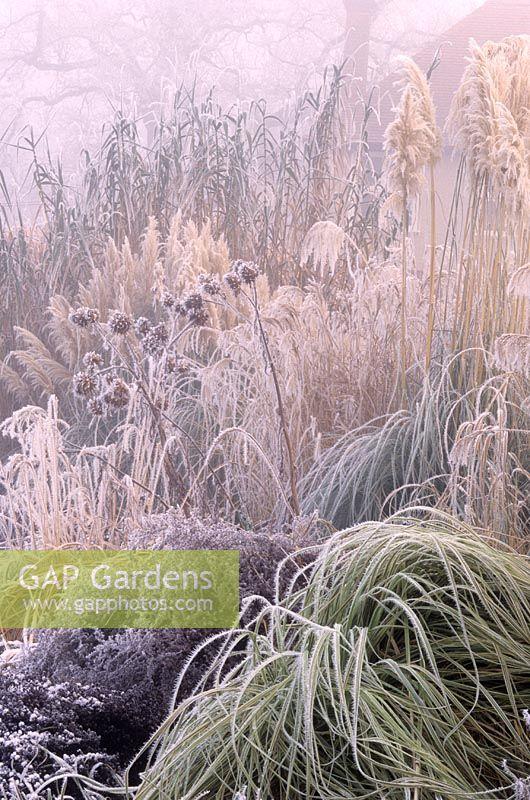 Gap gardens border of ornamental grasses in hoar frost winter border of ornamental grasses in hoar frost winter rhs wisley surrey workwithnaturefo