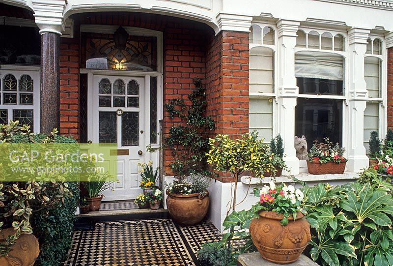 front garden of terraced victorian house with containers and fatsia japonica
