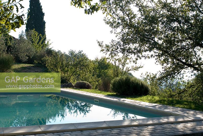 Swimming pool in the garden of an old Tuscan farmhouse with Olive trees in September