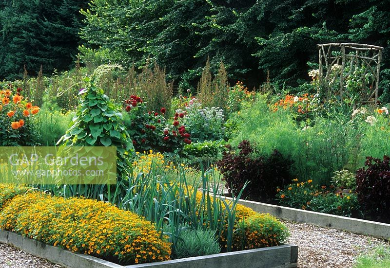 Potager Vegetable Garden With Integrated Annuals And Vegetables. Runner  Beans On Teepee Obelisk Plant Support