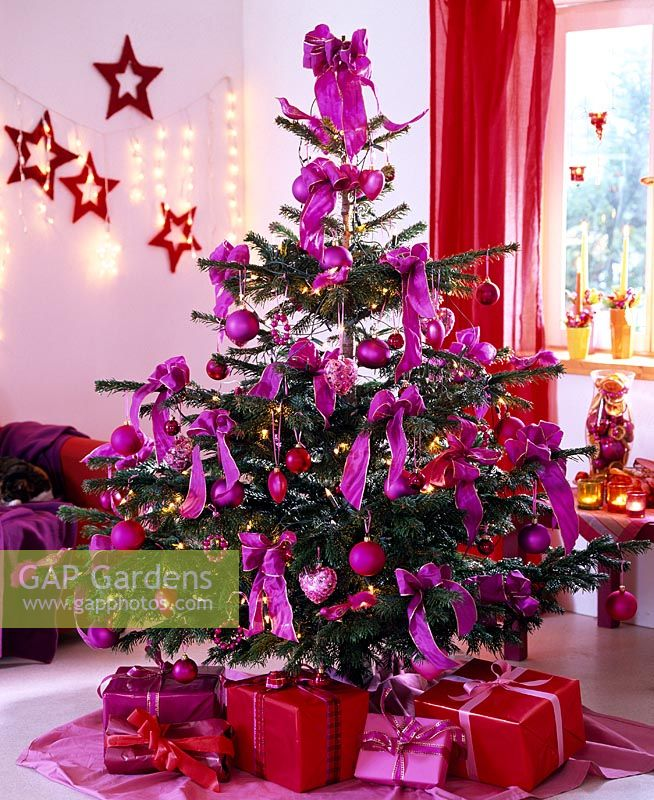 GAP Gardens - Abies nordmanniana - Decorated Christmas tree in ...