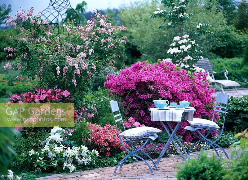 Gap gardens rhododendron yakushimanum syringa reflexa for Table no border