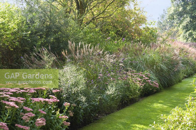 Gap gardens autumn border grasses miscanthus sinensis for Ornamental grass border design