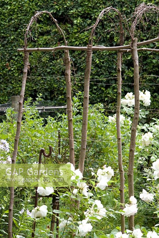 Tunnel to support Lathyrus - sweetpeas made from hazel uprights and birch to make the arch. Rosa 'Iceberg' in foreground in The Potager.