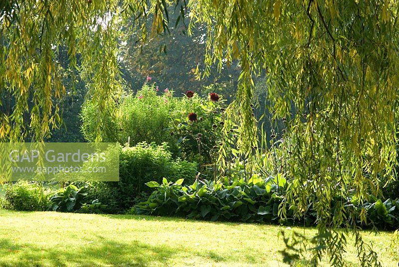 Gap Gardens Salix Willow Tree Overhanging Branches Framing The