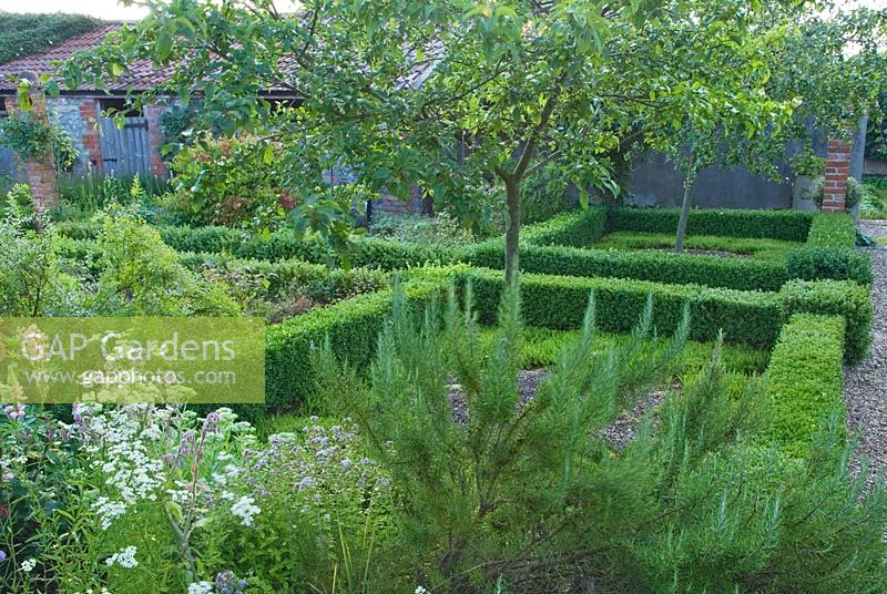 GAP Gardens - Low box hedges define beds planted with Malus \'Red ...