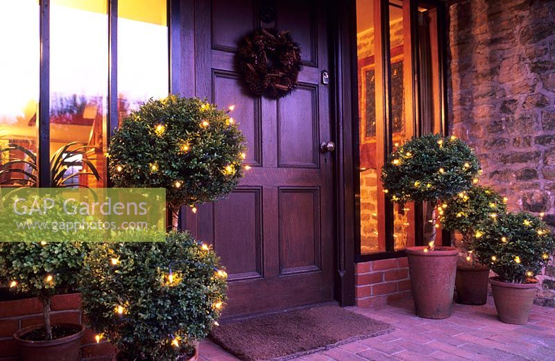 Christmas Topiary For Front Porch.Gap Gardens Outdoor Christmas Decorations Lights On