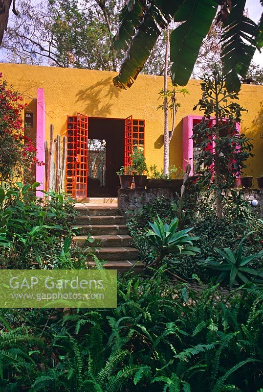 Gap Gardens Contemporary House With Yellow Walls Pink And Red Doors And Tropical Planting