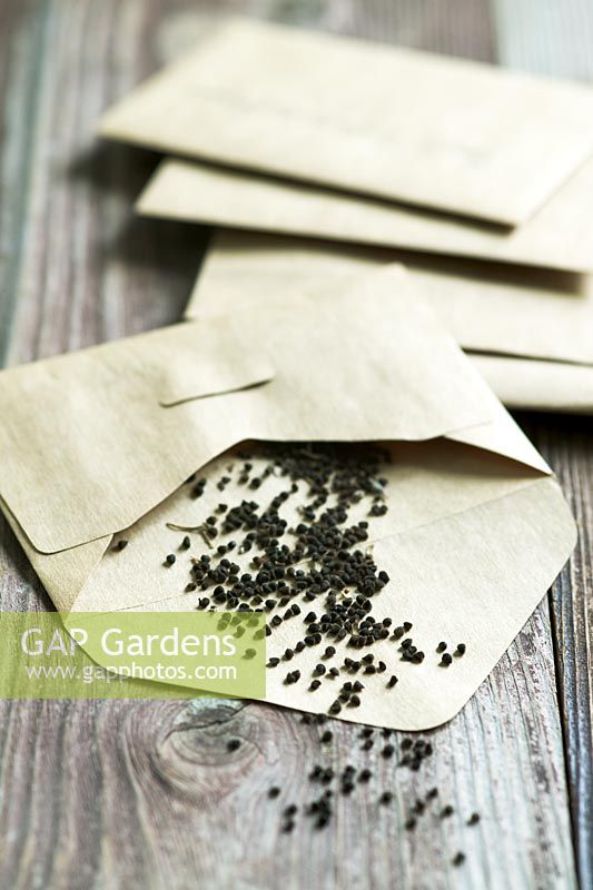 Seed packets and seeds from Nigella damascena