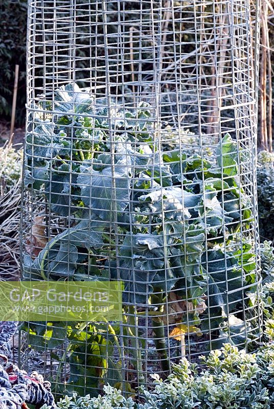 GAP Gardens - Wire cage around garden plant - Protection from ...