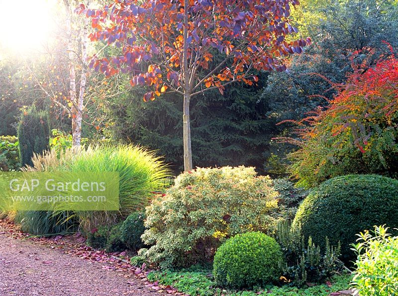 Gap gardens autumn border with ornamental grasses for Best grasses for borders