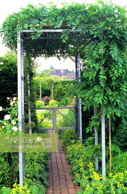 A metal pergola with climbing plants and Alchemilla at base - GAP Gardens - A Metal Pergola With Climbing Plants And Alchemilla At