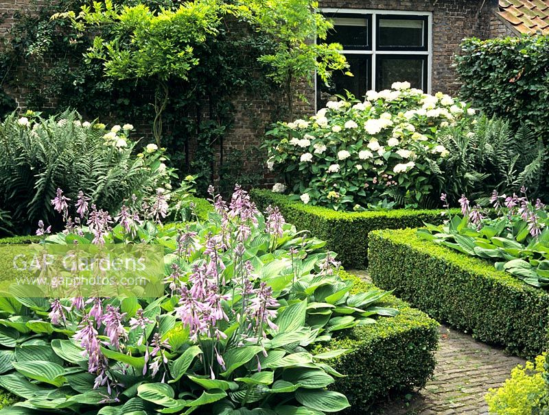 Gap gardens front garden with formal edged beds of hosta for Formal front garden ideas