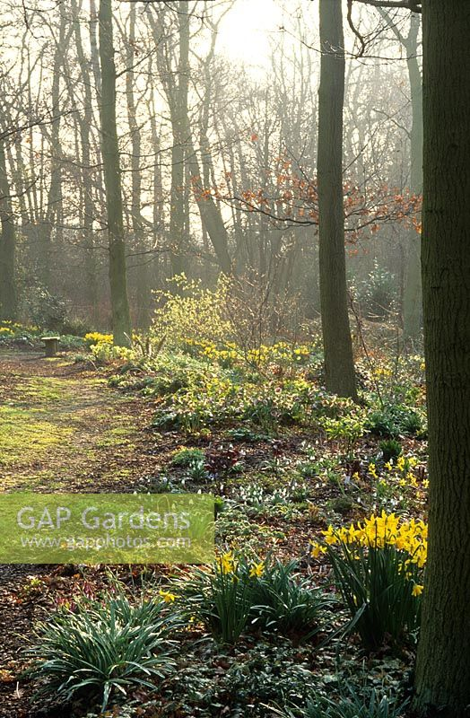 Early morning mist and sunlight in the woodland garden at Beth Chatto's